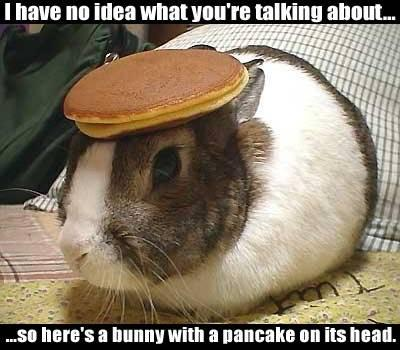 rabbit with pancake on head