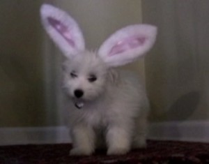 attack of the easter puppy