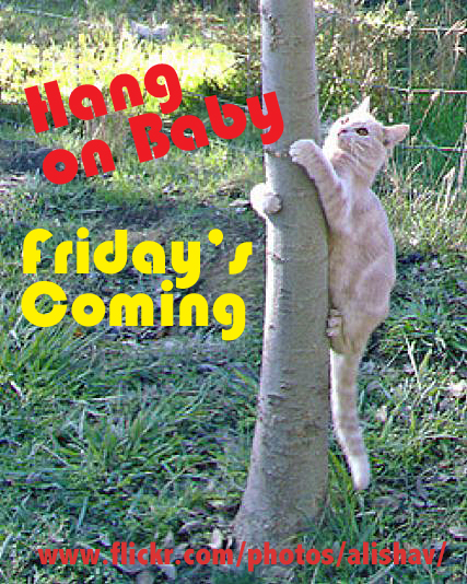 Hang In There Baby Fridays Coming