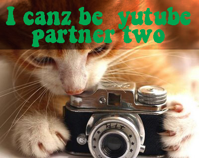 Youtube partner cat kitten